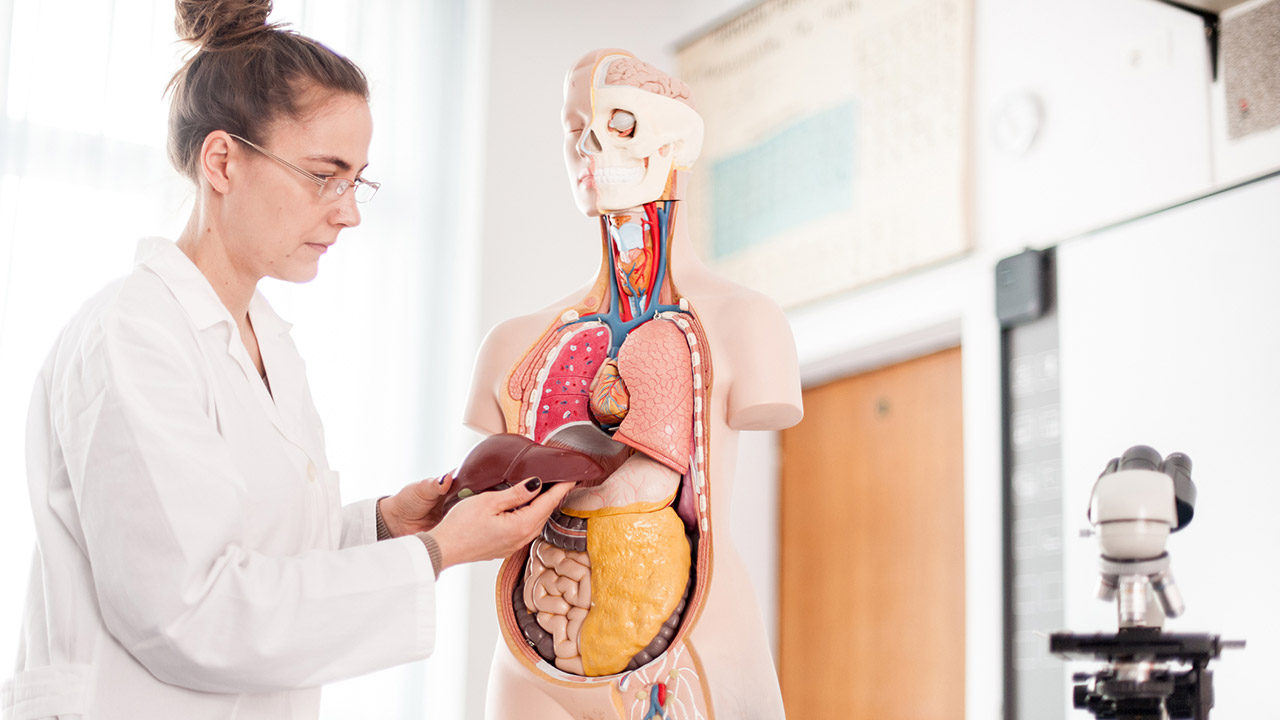 Boala ficatului gras: simptome, cauze, riscuri, complicatii, diagnostic si tratament