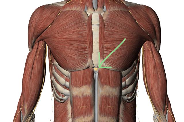 dureri apendicele xifoid